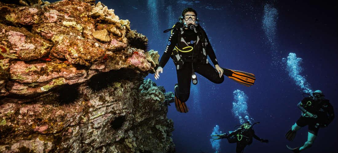 hammerhead Shark Dive Maui Hawaii