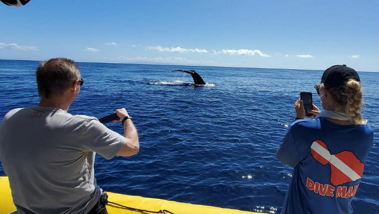 best time to whale watching hawaii