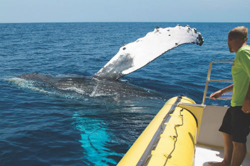 Best whale watching in Maui