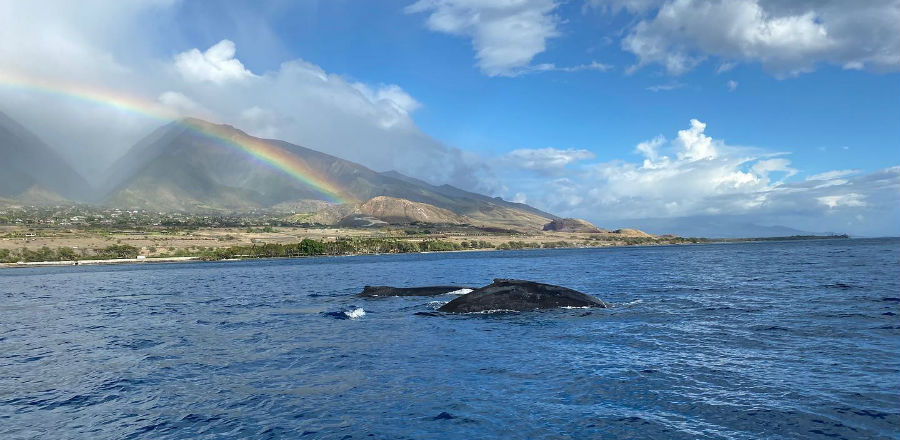 best time of day for whale watching in maui