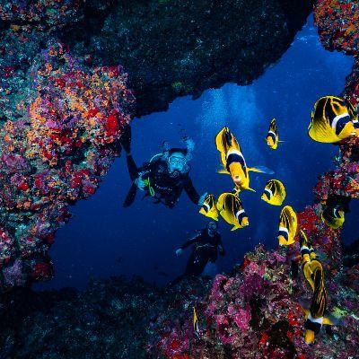 Best reef diving maui