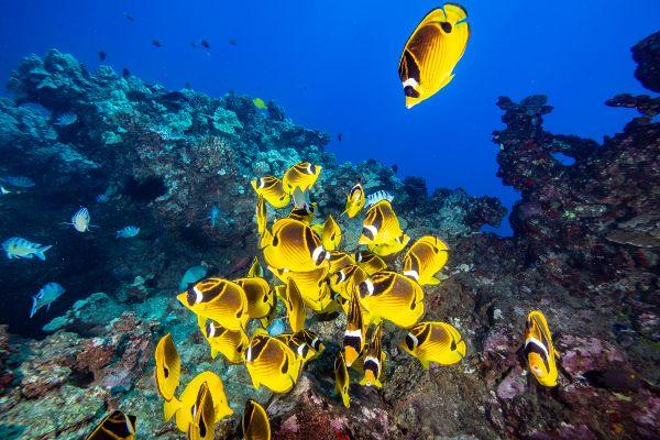 Shore diving maui fish