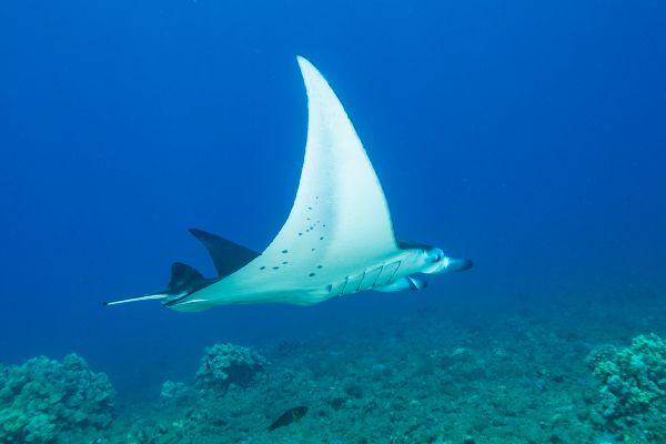 Discover SCUBA Diving on beautiful Maui