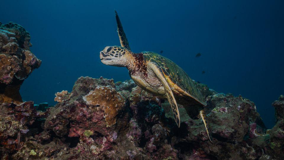 Dive sites on Maui west coast