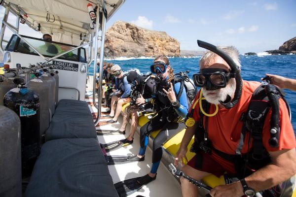Hammerhead shark diving on maui