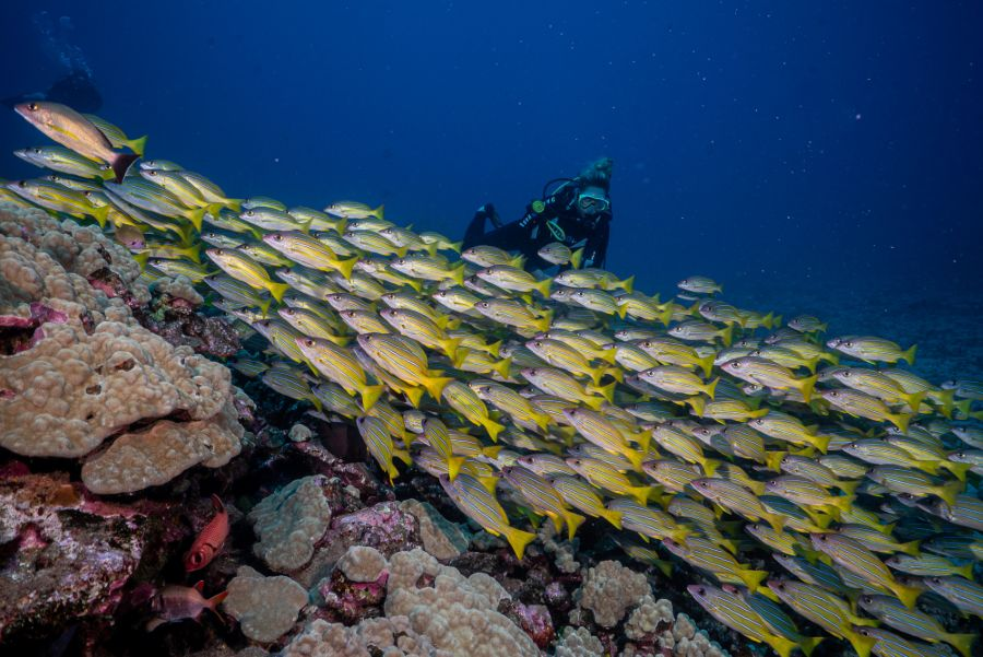 Private Guided Dives