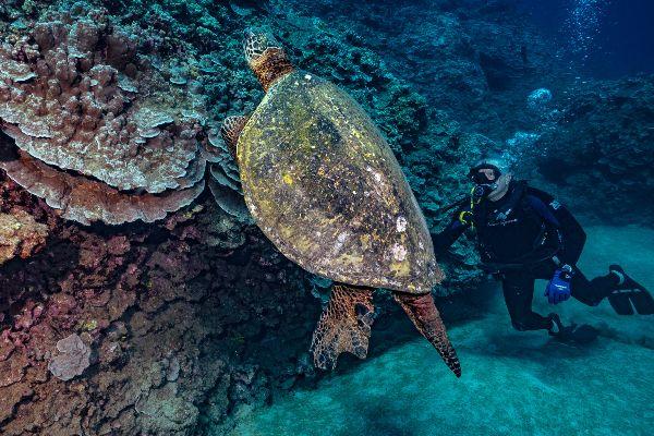 Slaughterhouse Bay diving