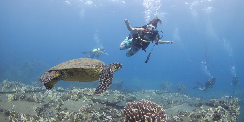 best maui diving
