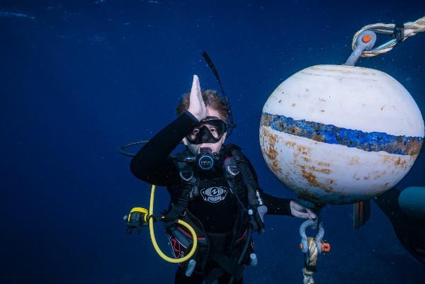 is shark diving dangerous