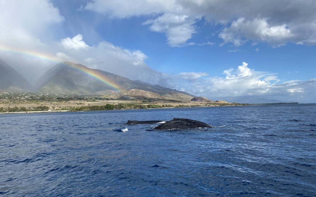 Whale Watching from the Maui Shore