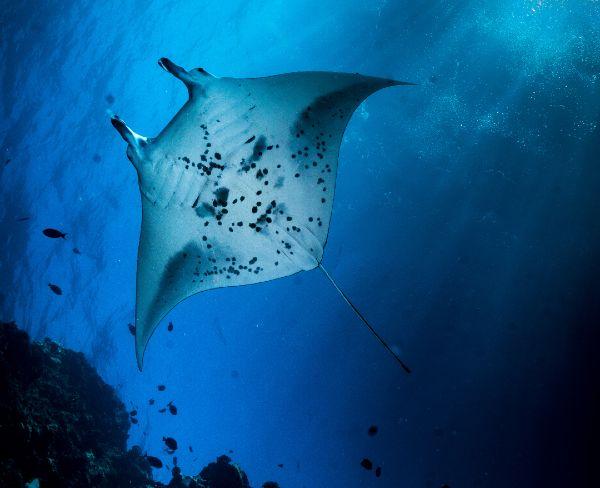 best Maui dive company for Lanai Drift Dives